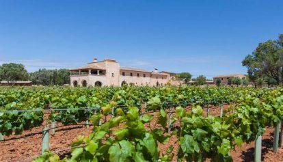Mallorca's Best Wine Sips